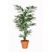 Kentiapalm / kunstplant ca 200cm
